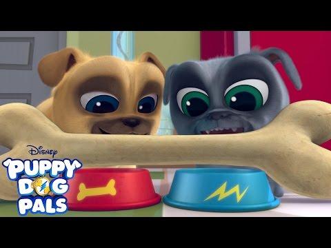 Theme Song | Puppy Dog Pals | Disney Junior