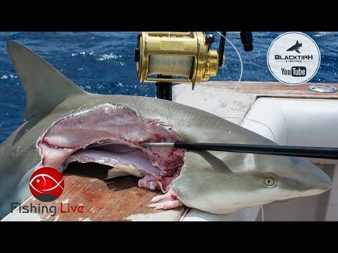Fishing Live - Shark Fishing in Florida ft. BlacktipH. Kanalgratis.se