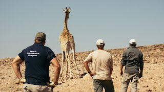 Faces2Hearts in NAMIBIA: Scientists are trying to get Angolan giraffes back home!