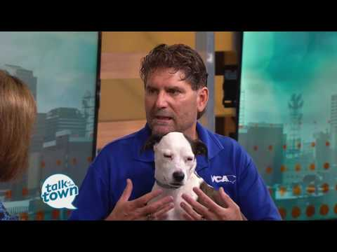 Heartworm Prevention for Dogs and Cats