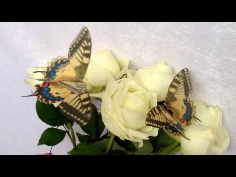 Wedding Bouquet with Butterflies