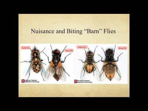 Barn Fly Management in/around Dairy Facilities