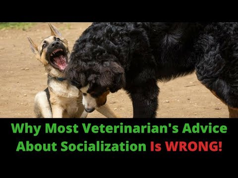 Puppy Socialization! The 3 Things You MUST Know To Do It Right.