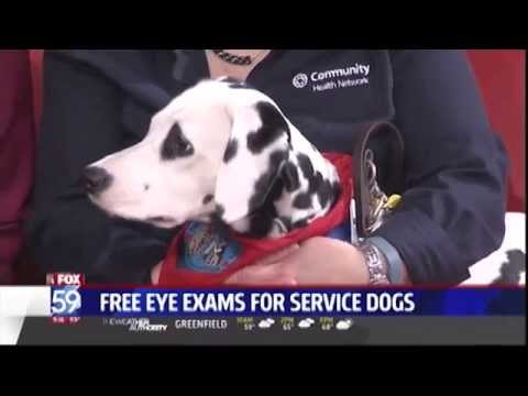 Free Eye Exams For Service Dogs - WXIN