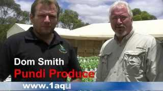 Aquaponics For Profit Commercial System In Australia - Pundi Aquaponic Farm (Part 2)
