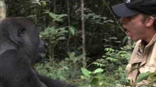 Gorilla Reunion: Damian Aspinall