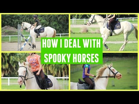 HOW I DEAL WITH SPOOKY HORSES