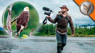 Bald Eagle Adventure!