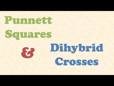 Punnett Squares and Dihybrid Crosses