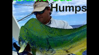 Islamorada Florida Keys, Offshore Tuna and dolphin fishing at the Humps