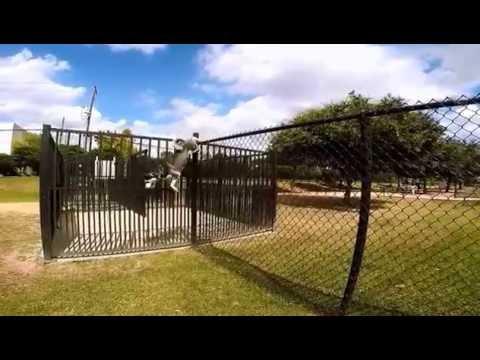 Siberian Husky Climbing a 6ft Fence
