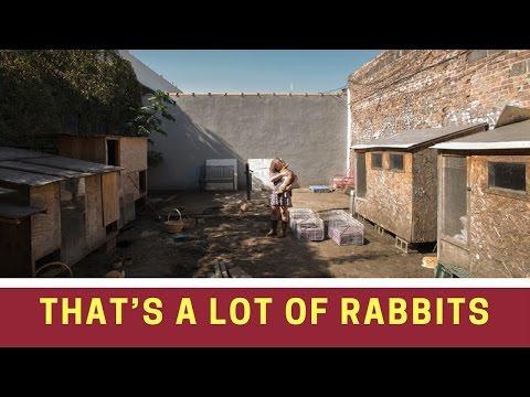 Rabbit   That's a Lot of Rabbits