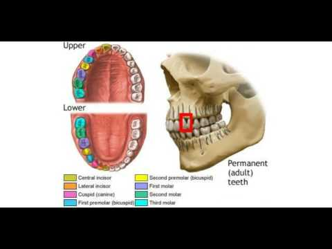 What is a Bicuspid