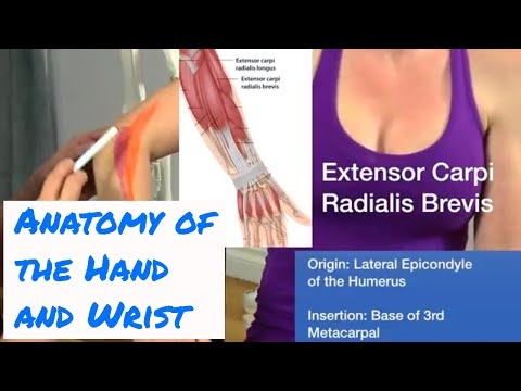 Anatomy of the Hand & Wrist - Motion Specific Release
