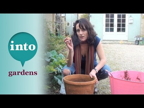 Planting a layered bulb pot