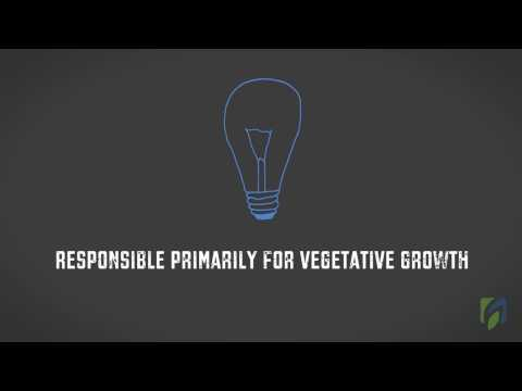 The effect of light on plant growth