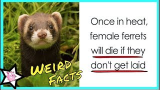 Weird Animal Facts That Will Change The Way You Look At Nature