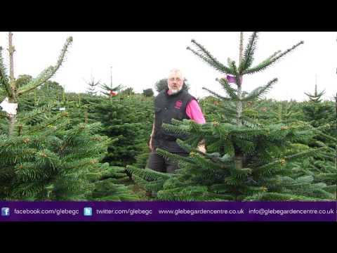 Real Christmas Trees Leicester | Glebe Garden Centre Leicester