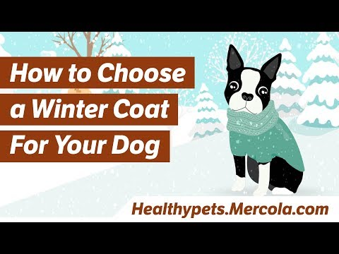 How to Choose a Winter Coat For Your Dog