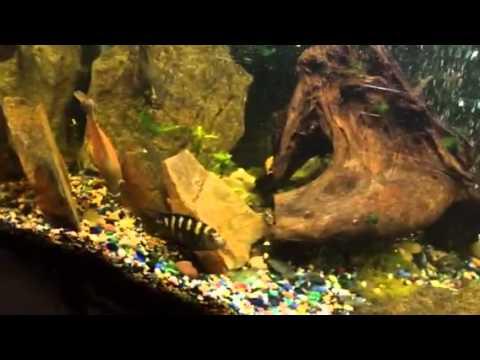 My theory on male & female Oscars fish