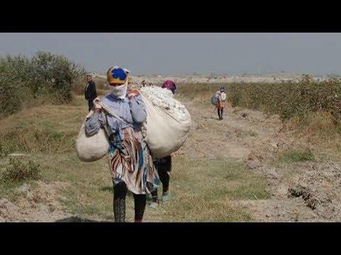 Uzbekistan: Forced Labor Linked to World Bank