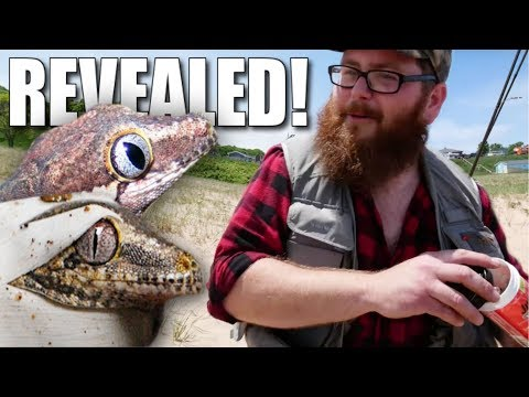 BABY GECKO HATCHED AND HOW TO CATCH A HUGE FISH ** by ERIC** | BRIAN BARCZYK