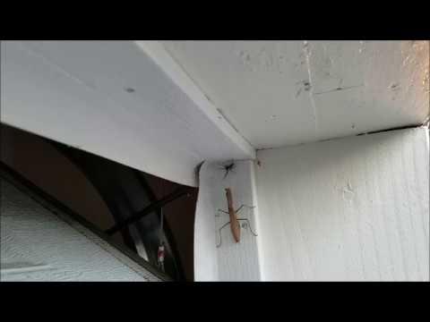 Praying Mantis vs Funnel Spider vs Cat