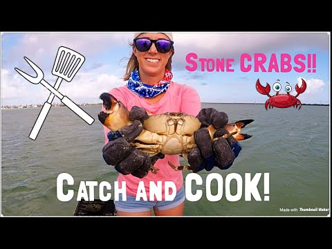 STONE CRABS!! Catching, Cooking and Eating TASTY!