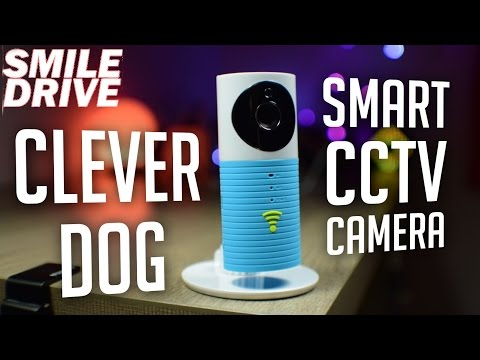 Cleverdog WIFI CCTV IP Security Camera - Its Clever !