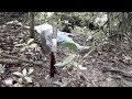 Curupira Pânico na Floresta Filme Completo HD
