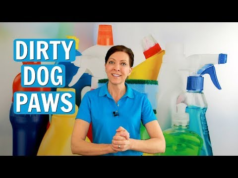 3 Top Ways to Clean Dirty Dog Paws - Easy House Cleaning Tips