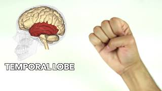 How to learn major parts of the brain quickly