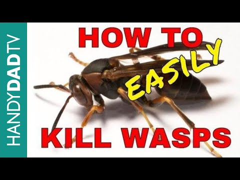 How to Kill Wasps the Easy Way