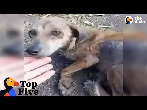 Woman Stops For Stray Dog On The Road That Changes Her Life + Other Dogs Rescues | The Dodo Top 5
