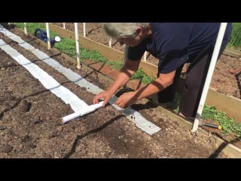 Planting Carrots With Toilet Paper