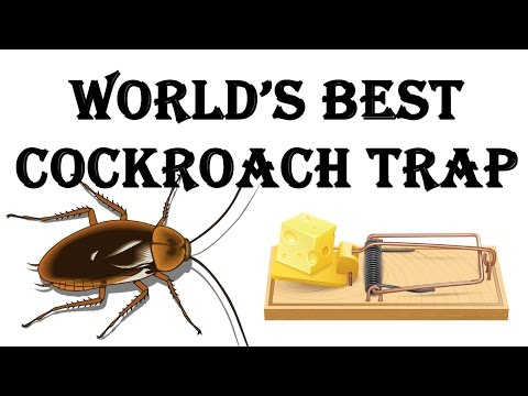 How to make the World's Best Cockroach Trap!