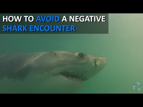 How to avoid negative encounters with sharks (Shark Attack Prevention) [Shark Science 101]