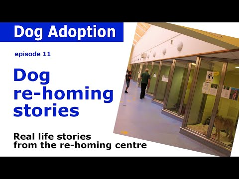 Dog Shelter stories and advice - from Dogstrust Leeds | Episode 11
