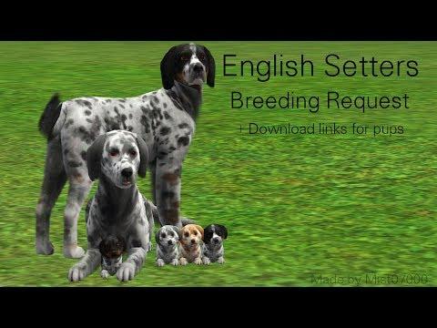 Breeding English Setters ~ Sims 3 Pets
