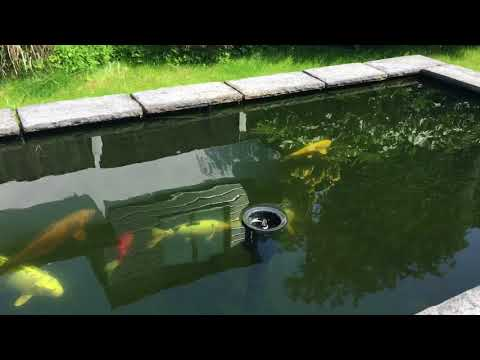 My  Koi pond - the battle with algae control