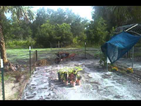 Southwest Florida Garden Update