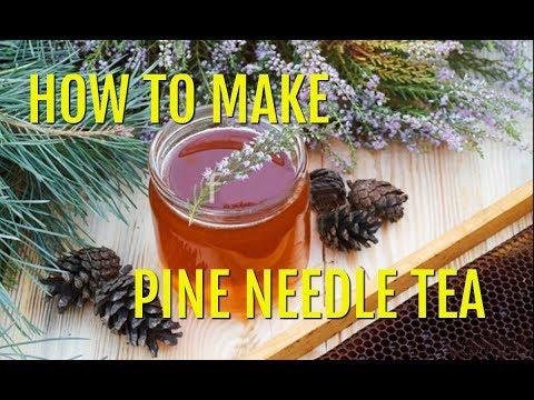 White Pine Needle Tea (How to Identify and Make Pine Needle Tea)