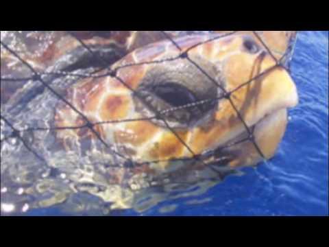 Save the Sea Turtles!