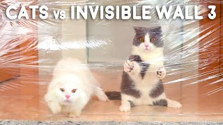 Cats vs Invisible Wall 3