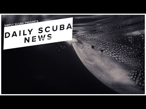Daily Scuba News - Swimming With Whale Sharks Isn't A Great Idea