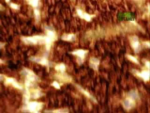When Animals Strike - Killer Bees Swarm