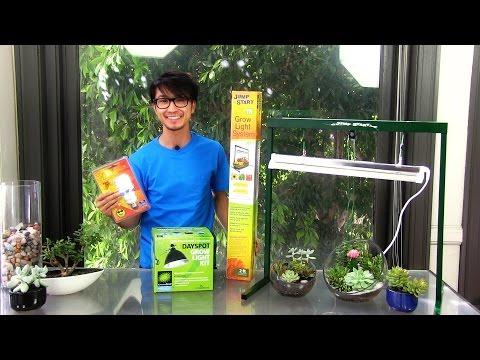 3 Convenient Grow Lights for Succulent Terrariums