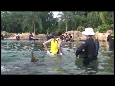 Vallish Family Get Away to Discovery Cove 2017