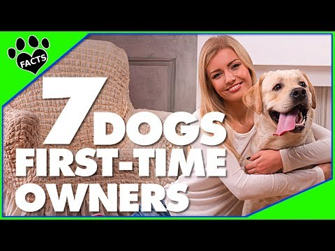 7 Dog Breeds for First-Time Dog Owners Dogs 101 - Animal Facts