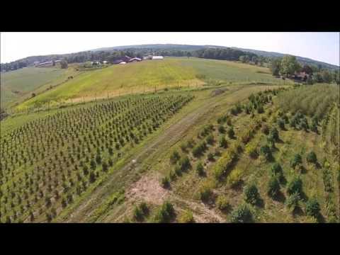 Start Making Big Money Growing Trees for Profit